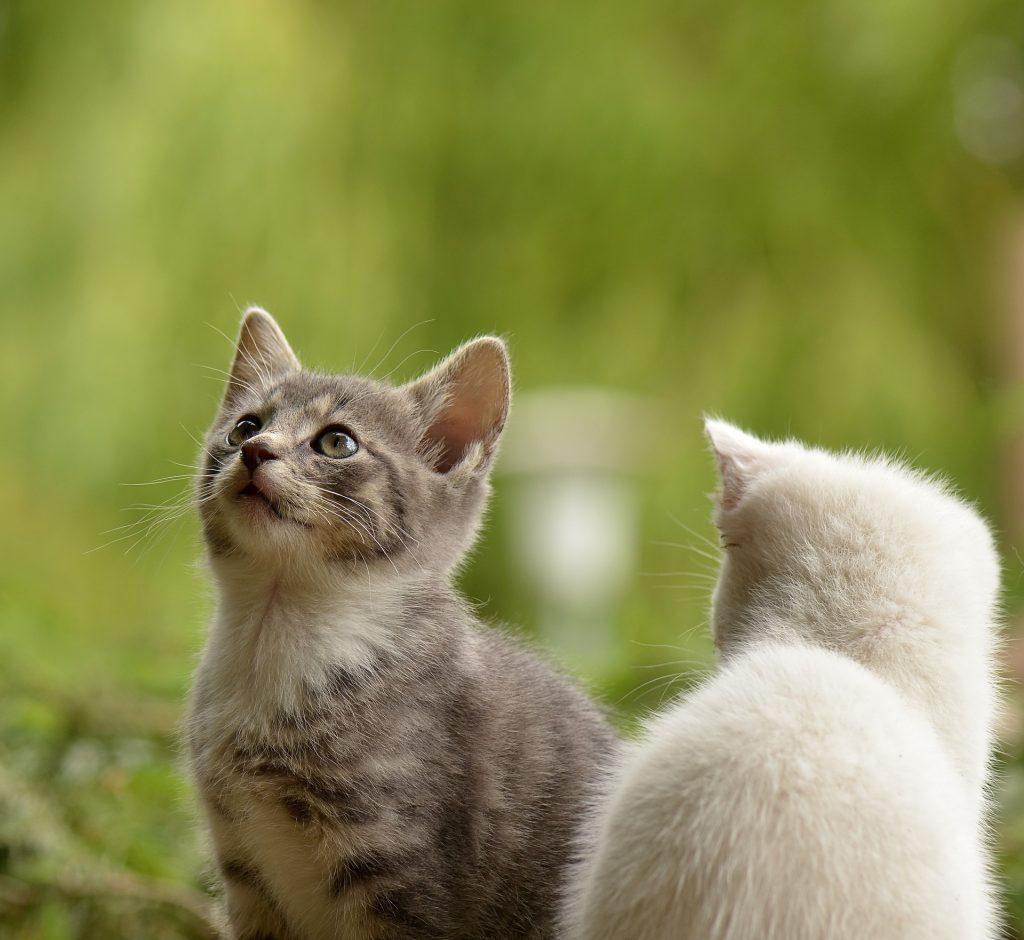 Kattungar utomhus