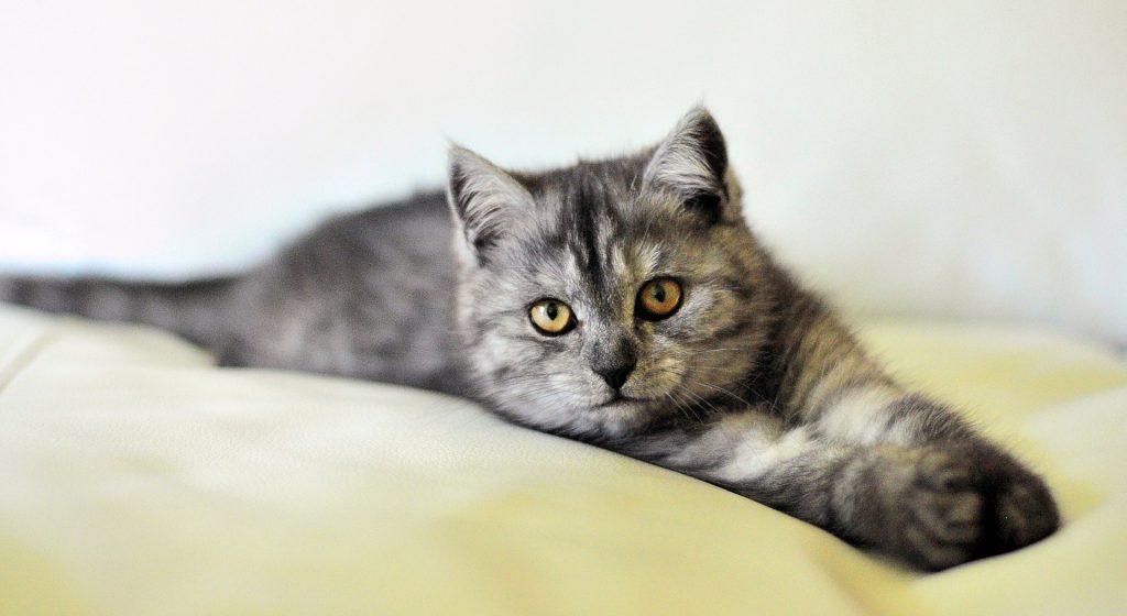 Bäst kattförsäkring 2021
