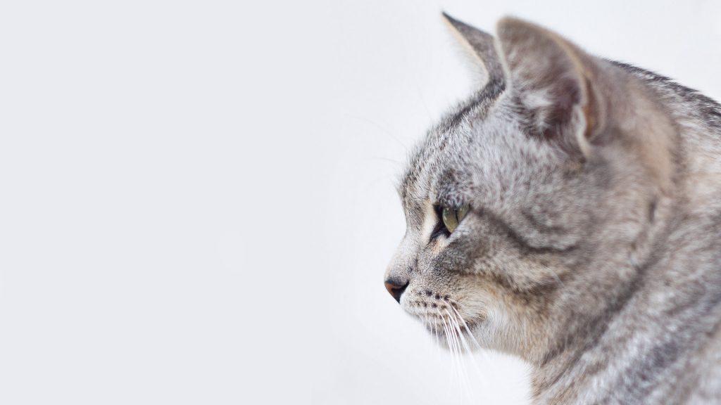 Kattunge grå