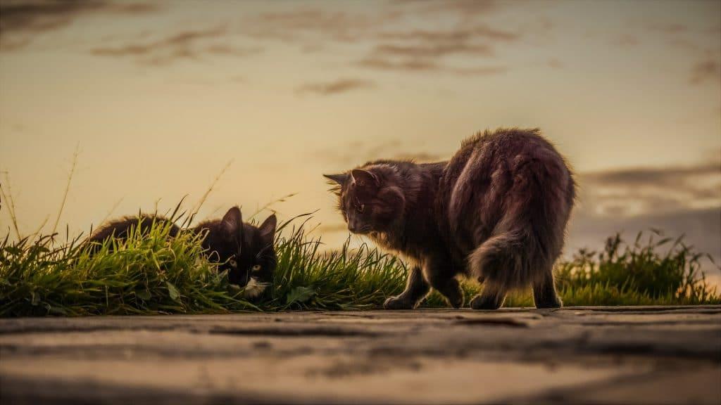 10 giftiga växter för katter