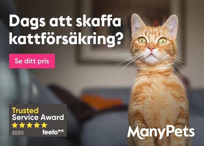 ManyPets Kattförsäkring