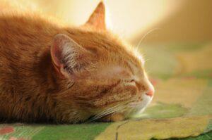Byta kattförsäkring