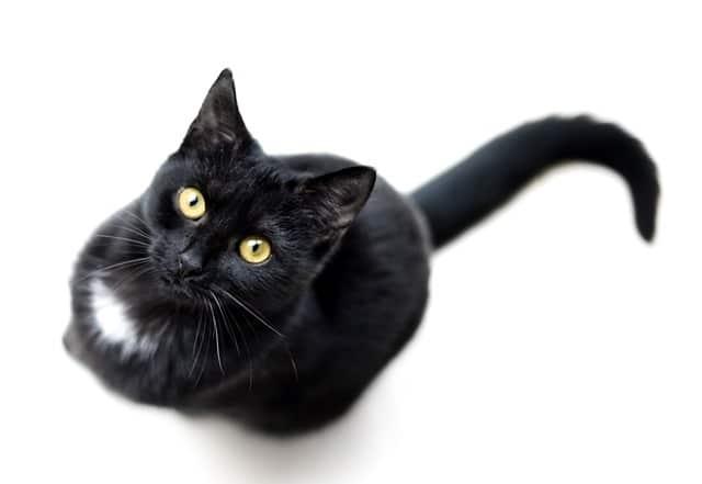artiklar om kattförsäkringar